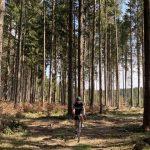 Gravel durch den Wald